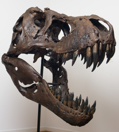 quijada-tiranosaurio.jpg
